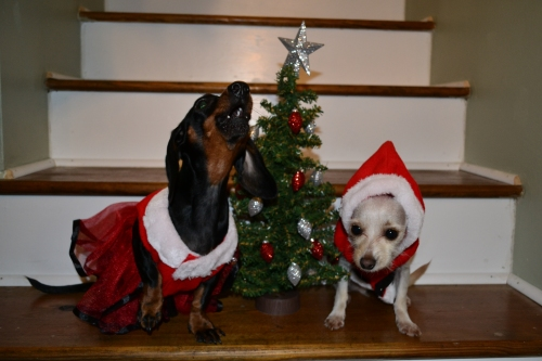 Our Christmas granddogs