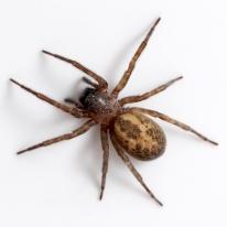 spider-facts